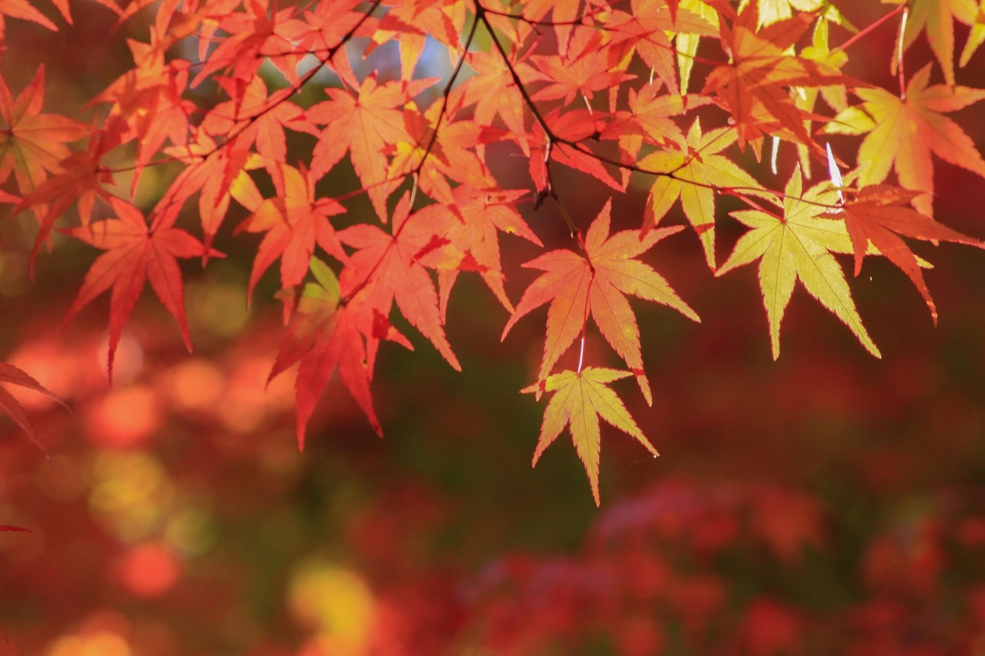 箕面在住ライターおすすめ!北摂秋の紅葉スポット