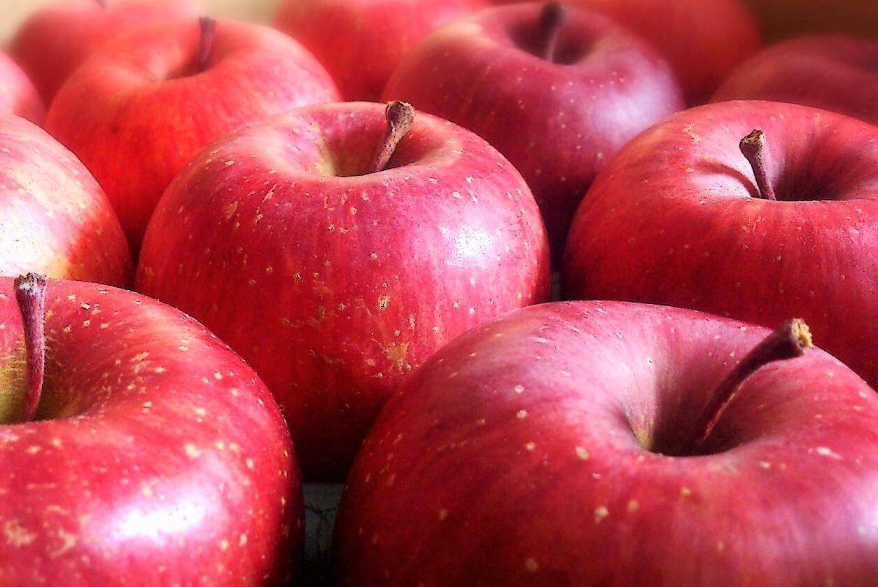りんご1個のカロリーは?「医者いらず」だけど、ダイエット的にはどう?