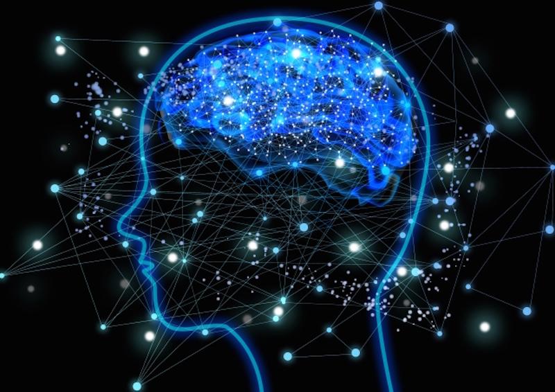 脳は大量にエネルギーを消費している