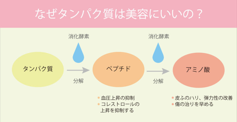 アミノ酸の分解